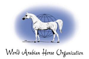 """لقرابة الـ6 عقود.. """"الواهو"""" تحفر تاريخ الحصان العربى الأصيل"""