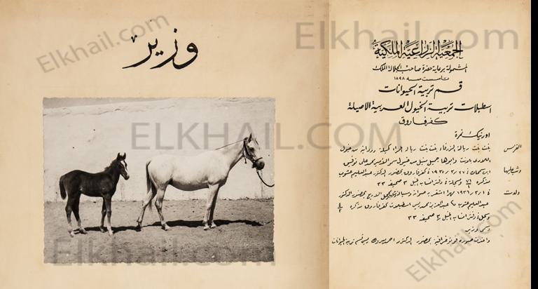 الحصان وزير