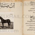 الحصان ابن صباح